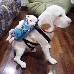 Parent dog with puppy