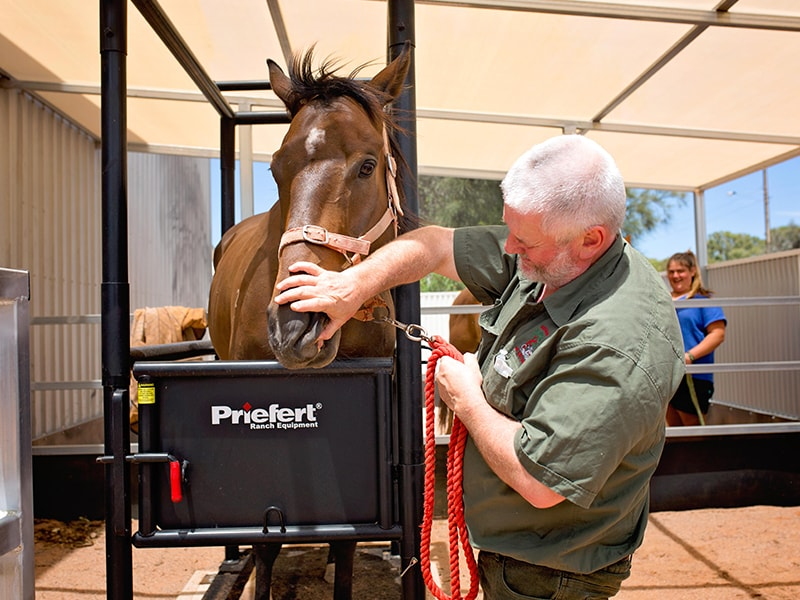 Dr Roger Absalom, Senior Vet, with horse patient