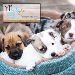 YP Puppy Rescue puppies